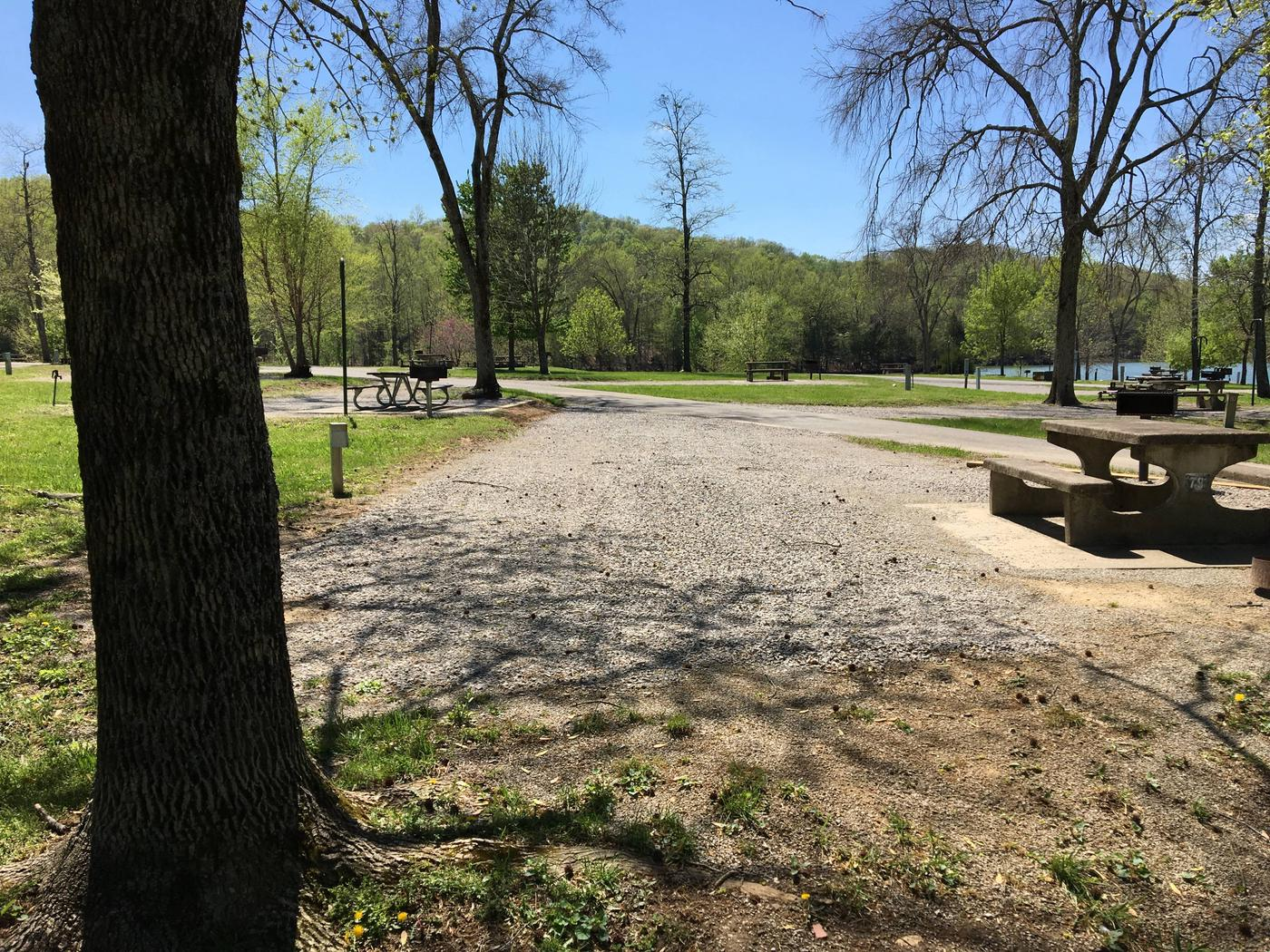 LILLYDALE CAMPGROUND SITE # 79