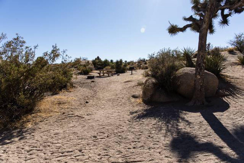 Jumbo Rocks site 38Path to campsite