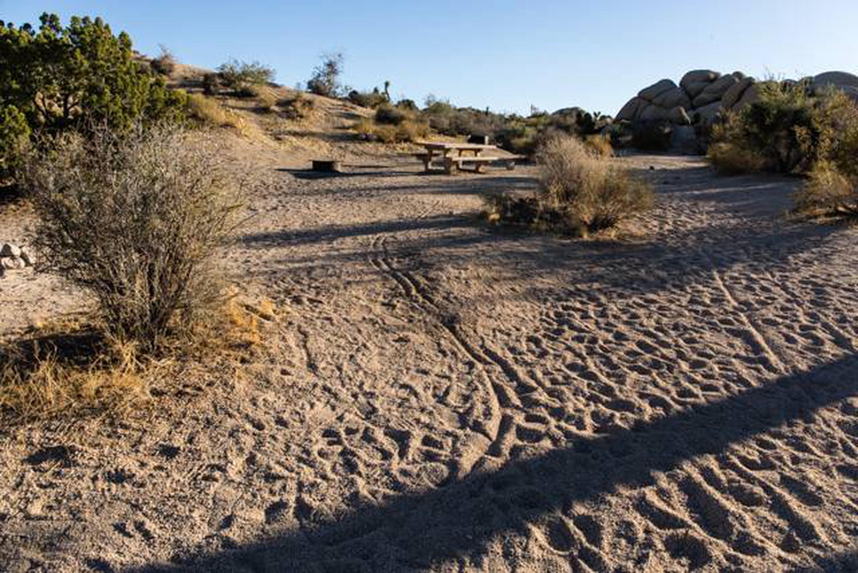 Jumbo Rocks site 51campsite