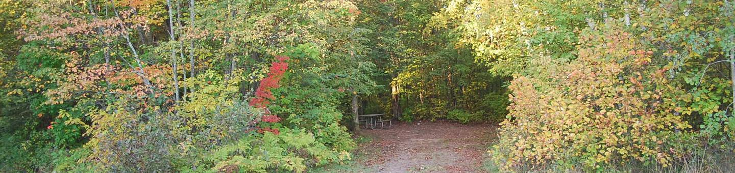 Bay Furnace Campground site #04; heavily treed site with picnic table and fire pit.