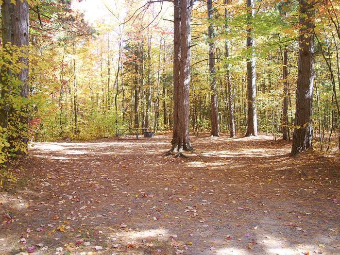 Bay Furnace Campground site #20; heavily treed site with picnic table and fire pit.
