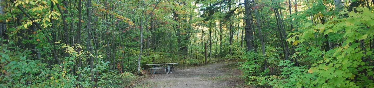 Bay Furnace Campground site #44; heavily treed site with picnic table and fire pit.