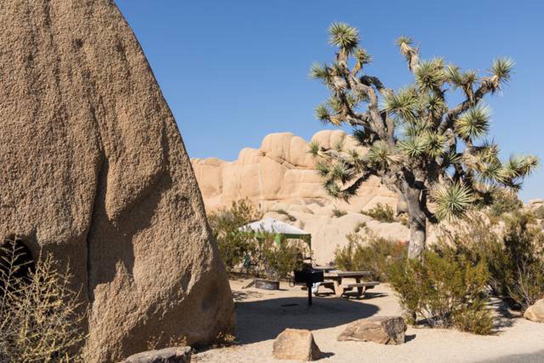 Jumbo Rocks site 116Campsite