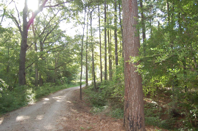 Beard's Bluff Park (Ar)