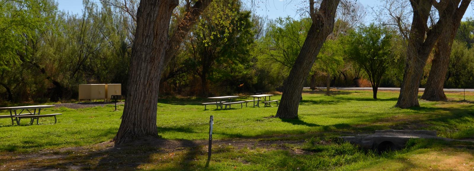Tree-lined road through the campsiteCampsite B with trees, picnic tables and bear boxes