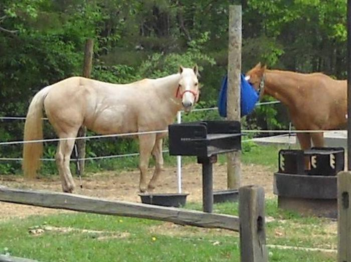 CANEBRAKE HORSE CAMP - Site 19Double Site # 19 is popular with horses and campers alike.