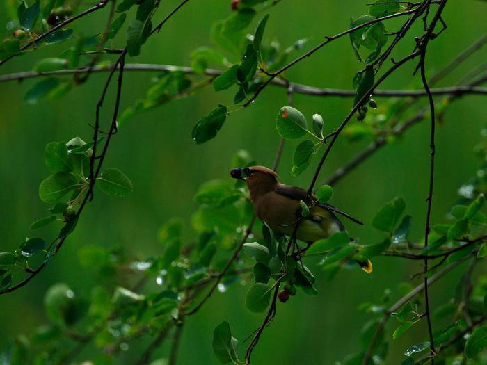 Little Pend Oreille National Wildlife Refuge