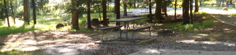 Cades Cove Campground B36