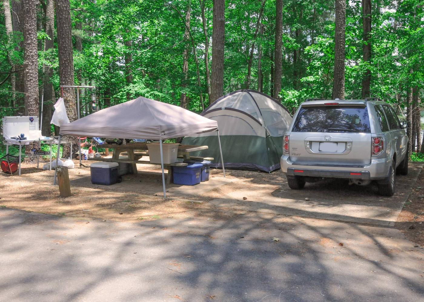 Driveway, campsite view.McKaskey Creek Campground, campsite 34.