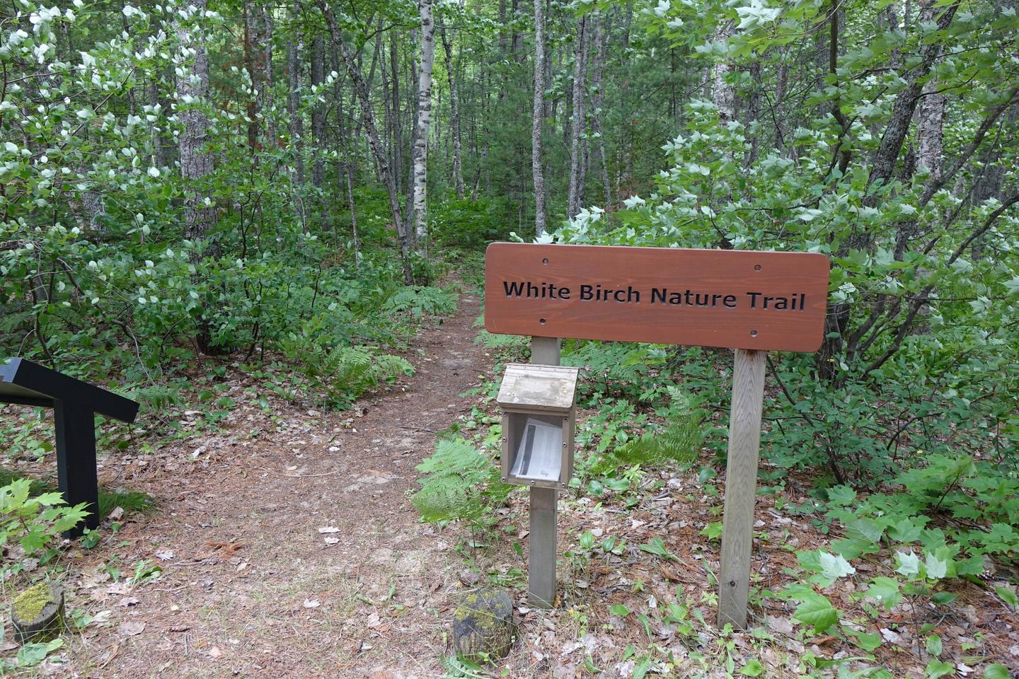 White Birch trail head at Twelvemile campground