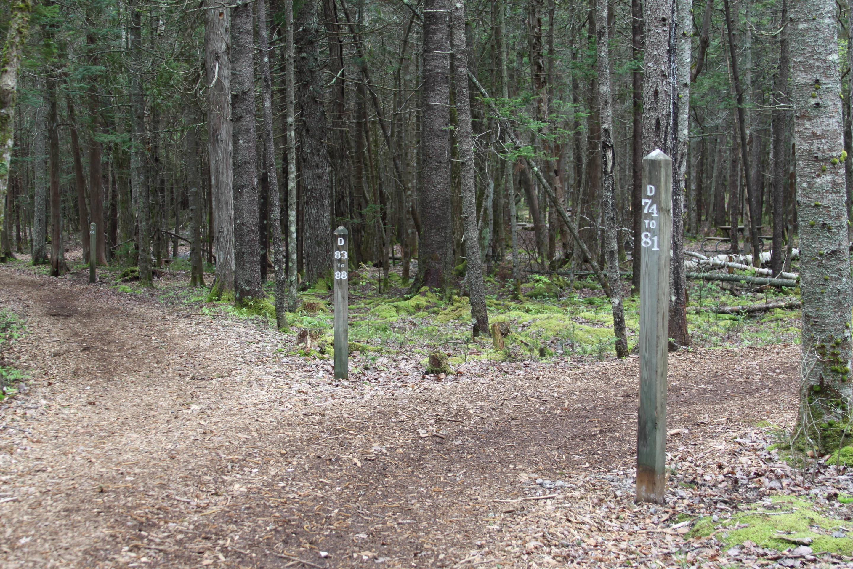 """Typical woodchip path in D-Loop (""""Walk-to"""" campsites)"""