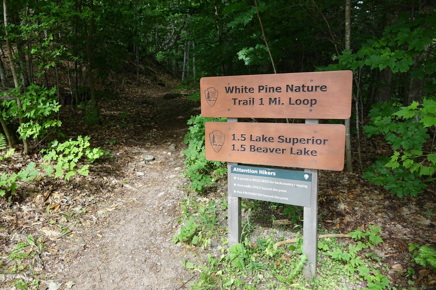 White Pine trail access from campground