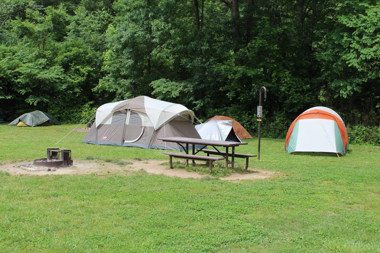 Steel Creek Camp Site #20 (photo 1)Steel Creek Camp Site #20