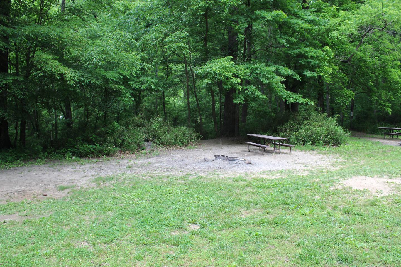 Steel Creek Camp Site #26 (photo 2)Steel Creek Camp Site #26