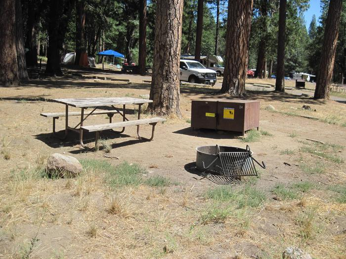Food locker, picnic table, and fire ringSite 24