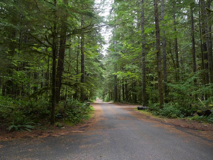 Preview photo of North Fork Campground (WA)