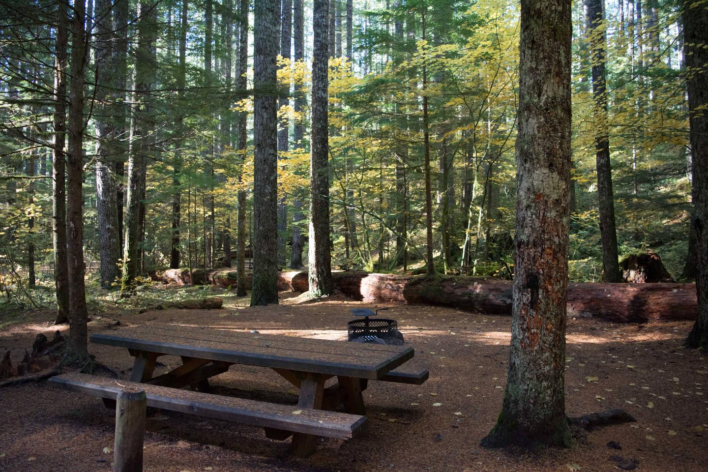 Lower Falls Campground site