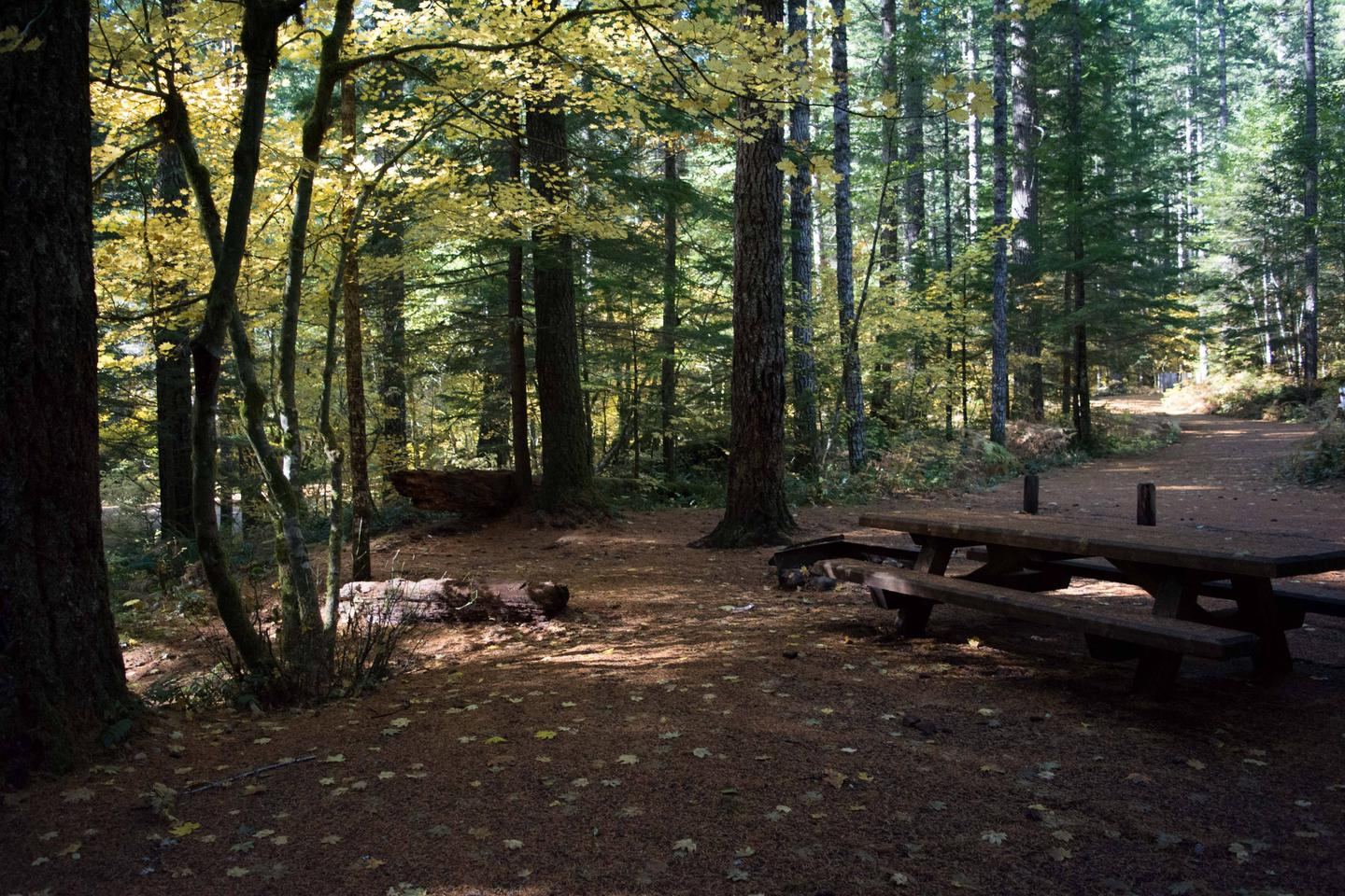 Lower Falls Campground in fall