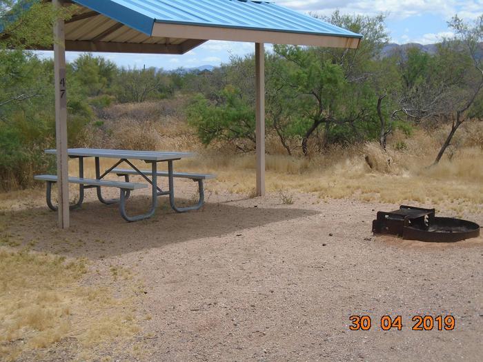 Campsite 47Campsite 47, Cholla Campground