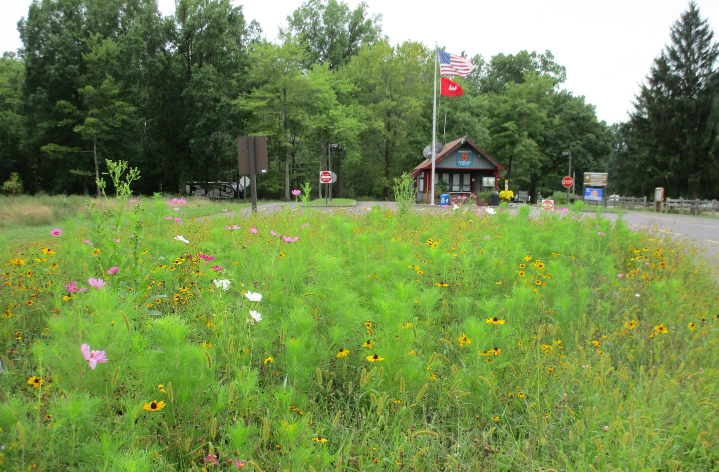 Pollinator Plot at the entrance booth for the Mill Creek Campground.