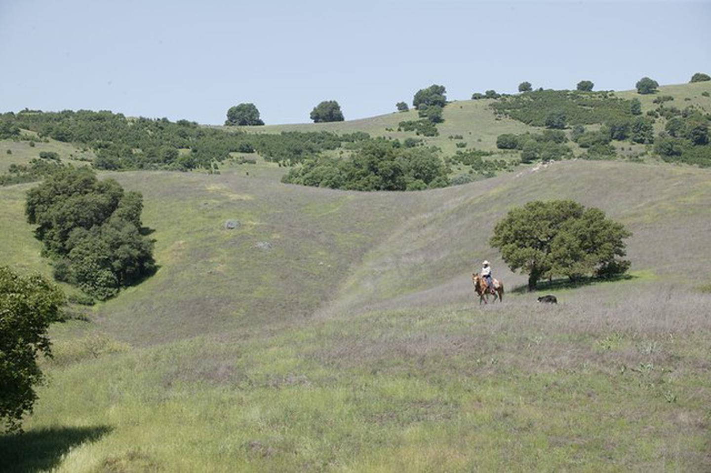 Cronan RanchHorseback riding