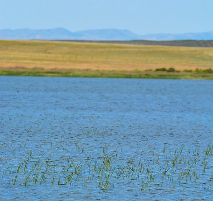 Goldeneye reservoir