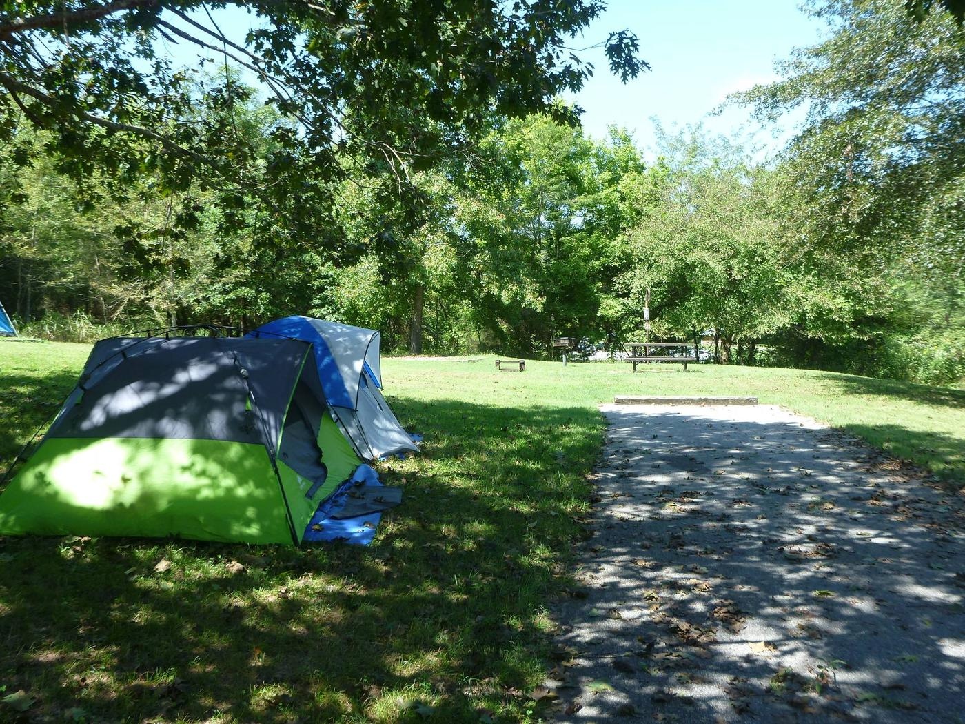 Tyler Bend Main Loop Site #20Site #20, 50' back-in, tent pad 15' x 15'.