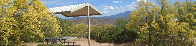 Campsite 9, Coati LoopWindy Hill Campground