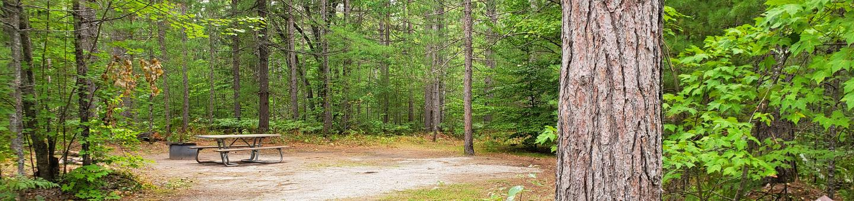 Island Lake site #08 full campsite view