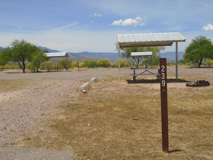 Campsite 239, Chipmunk LoopWindy Hill Campground
