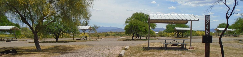 Campsite 245, Chipmunk LoopWindy Hill Campground