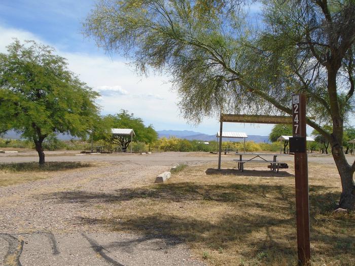 Campsite 247, Chipmunk LoopWindy Hill Campground
