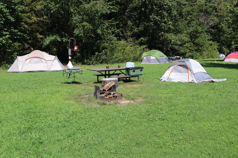 Steel Creek Camp Site #20 (photo 5)Steel Creek Camp Site #20