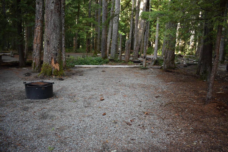 Ohanapecosh Campground - Site D001 Tent Space
