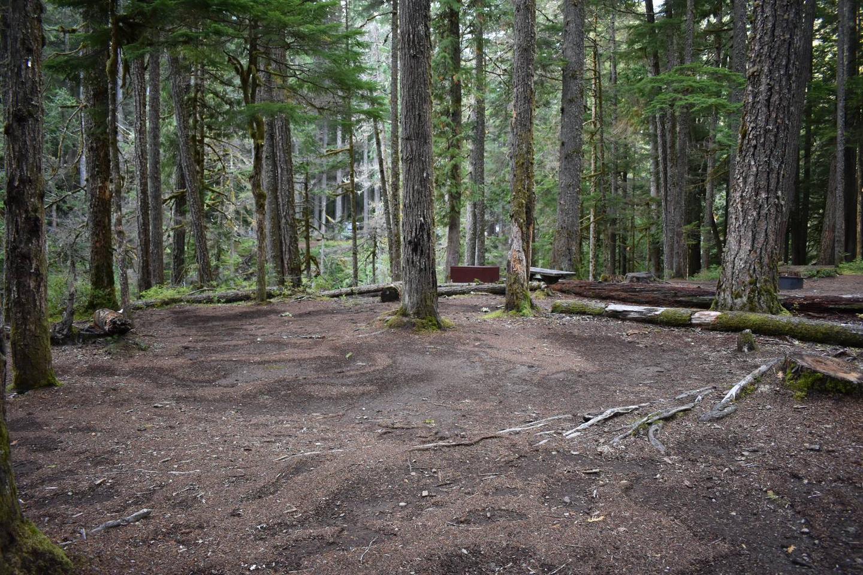 Ohanapecosh Campground - Site D002 Tent Space