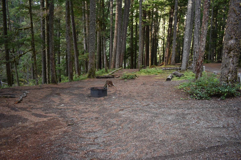Ohanapecosh Campground - Site D003 Tent Space