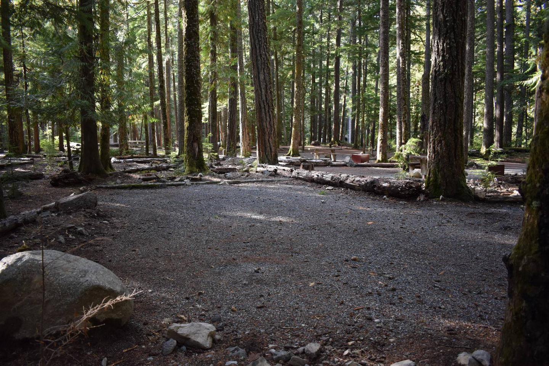 Ohanapecosh Campground - Site D009 Tent Space