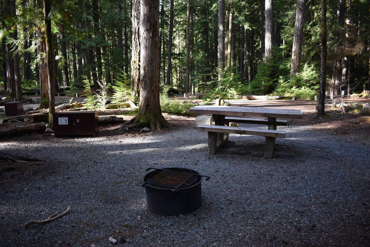 Ohanapecosh Campground - Site D009 AmenitiesCampers are provided with a picnic table, food storage box, and fire pit.