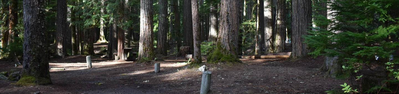Ohanapecosh Campground - Site D011