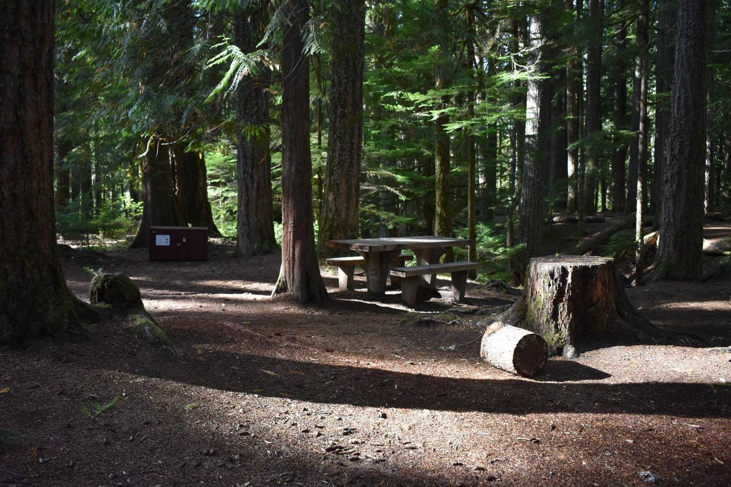 Ohanapecosh Campground - Site D011 AmenitiesCampers are provided with a picnic table, food storage box, and fire pit.