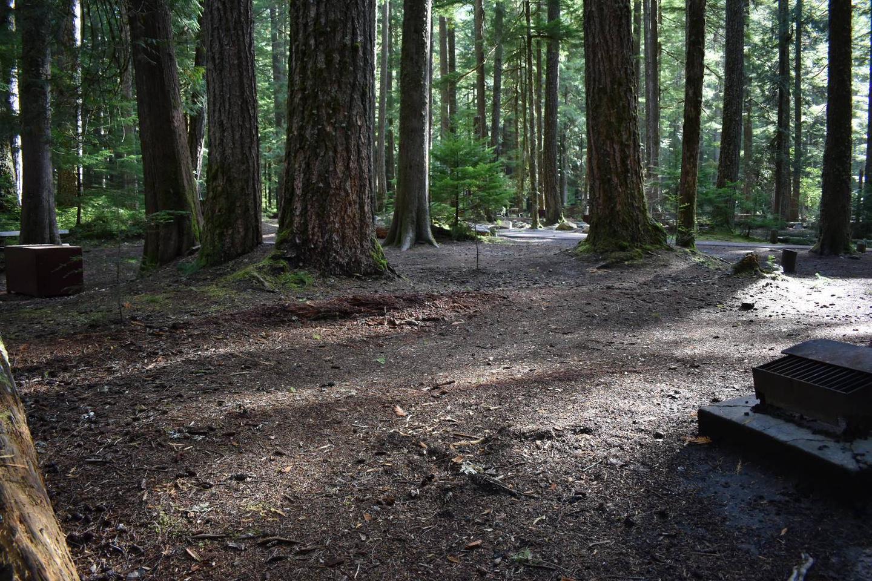 Ohanapecosh Campground - Site D011 Tent Space