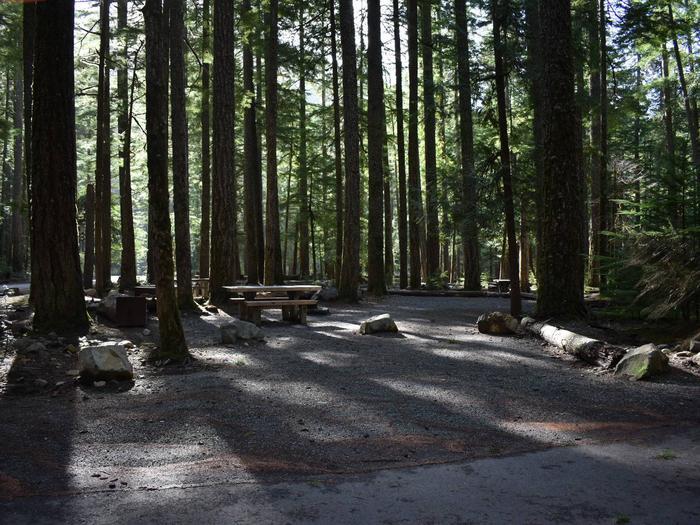 Ohanapecosh Campground - Site D012
