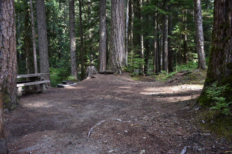Ohanapecosh Campground - Site D015 Tent Space