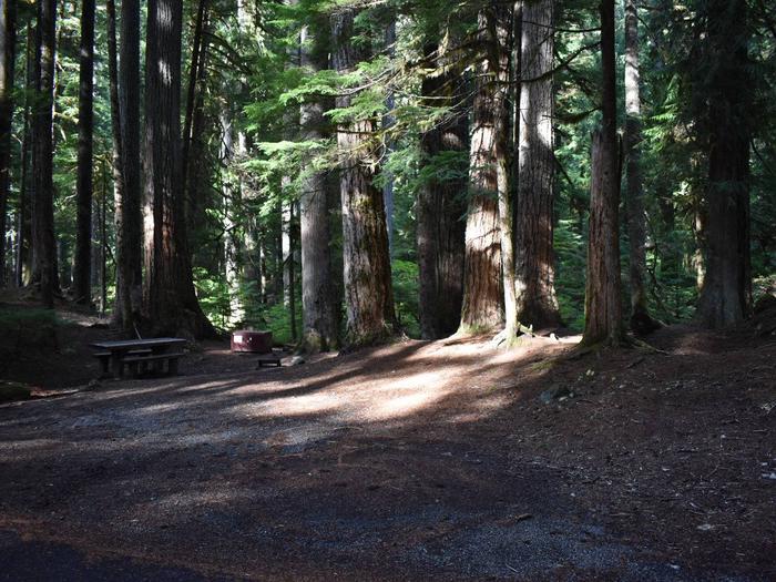 Ohanapecosh Campground - Site D016