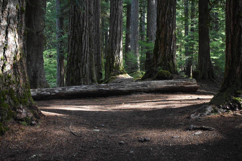 Ohanapecosh Campground - Site D016 Tent Space