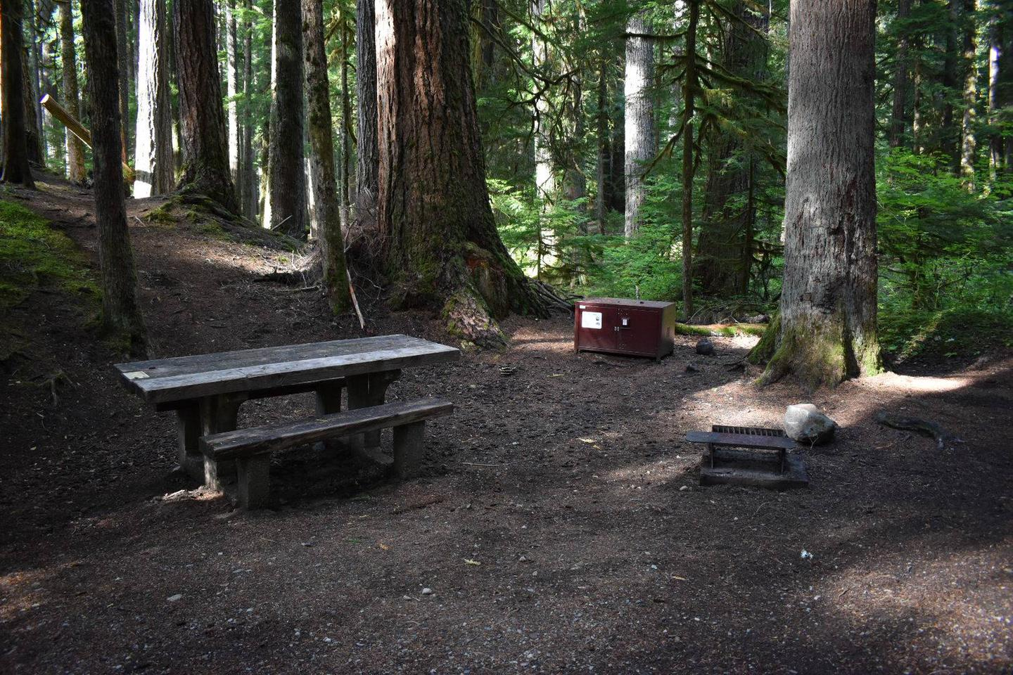 Ohanapecosh Campground - Site D016 AmenitiesCampers are provided with a picnic table, food storage box, and fire pit.