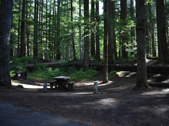 Ohanapecosh Campground - Site D017