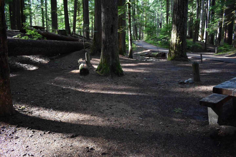 Ohanapecosh Campground - Site D017 Tent Space