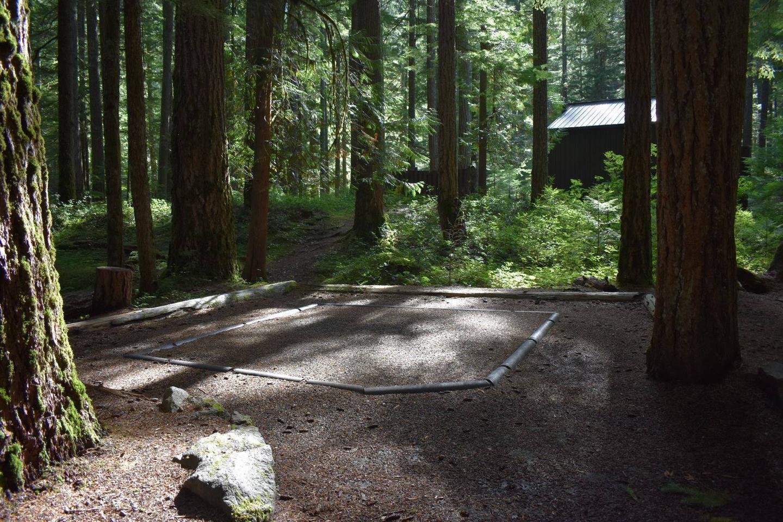 Ohanapecosh Campground - Site D020 Tent Space