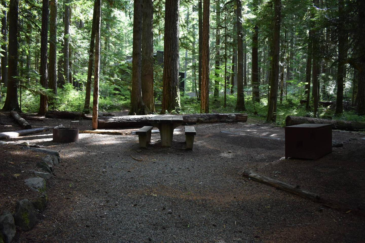 Ohanapecosh Campground - Site D021 AmenitiesCampers are provided with a picnic table, food storage box, and fire pit.